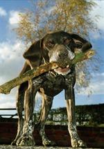 Dog EWA
