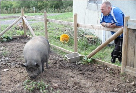 Vietnamese Pot Bellied Pig at Wharf Inn Fenny