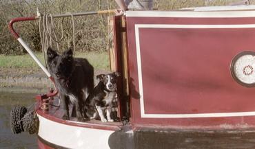 dogs_afloat.jpg